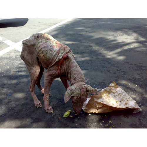Dog Mange Treatment Pets At Home