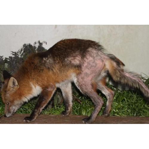 Dog Flea Treatment Natural Remedy